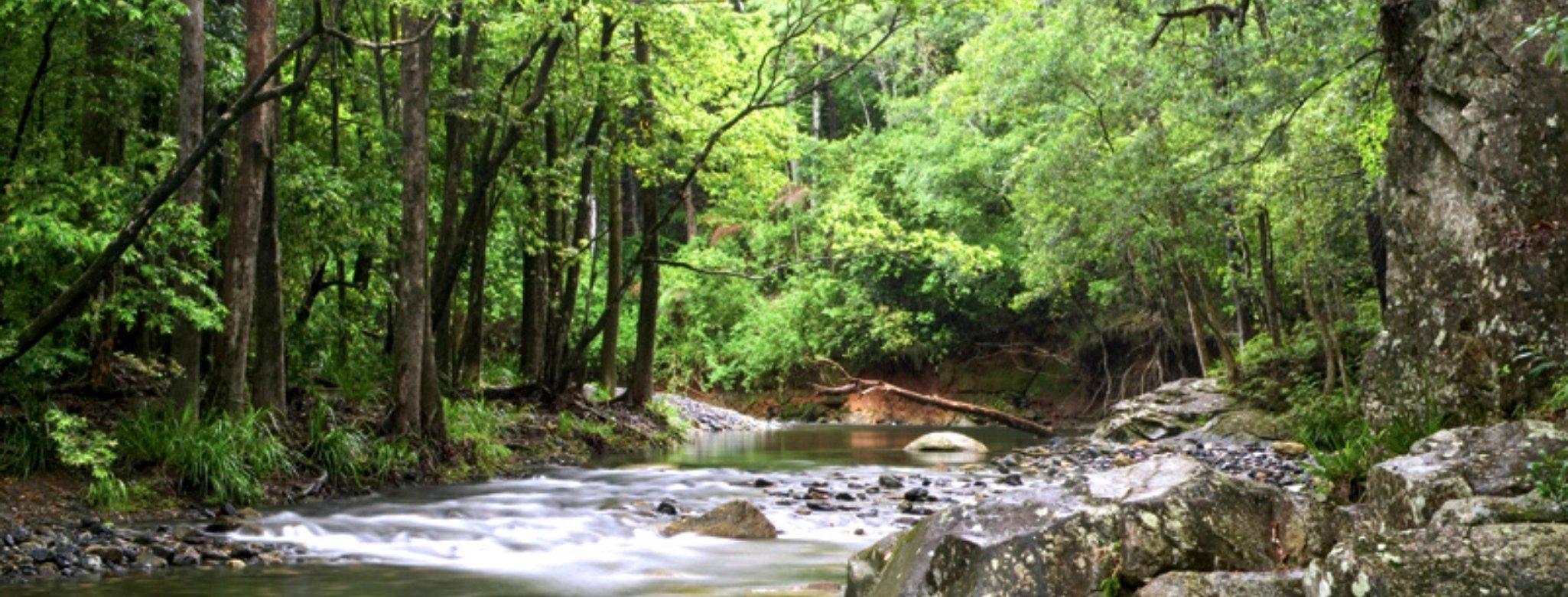 Never Never Creek, Promised Lands, Bellingen, New South Wales
