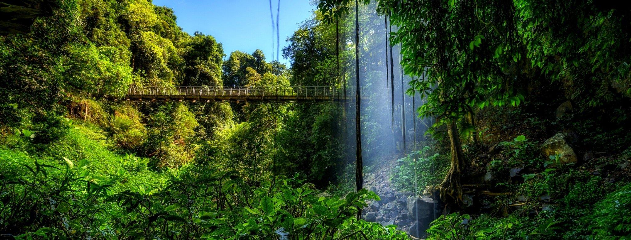 Crystal Waters Falls, Dorrigo National Park, New South Wales