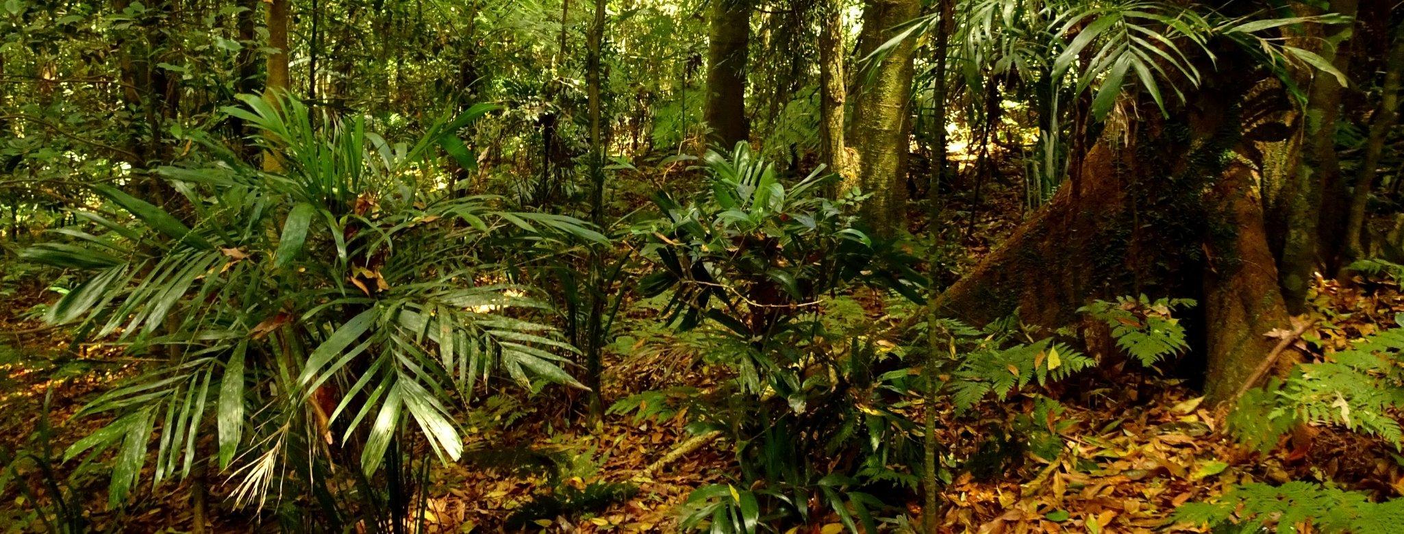 Gondwana Rainforest Dorrigo, Bellingen Shire, New South Wales