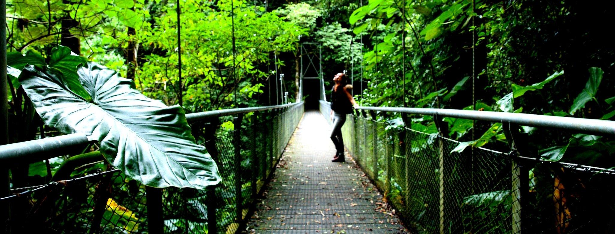 Crystal Showers Walk, Dorrigo National Park, New South Wales