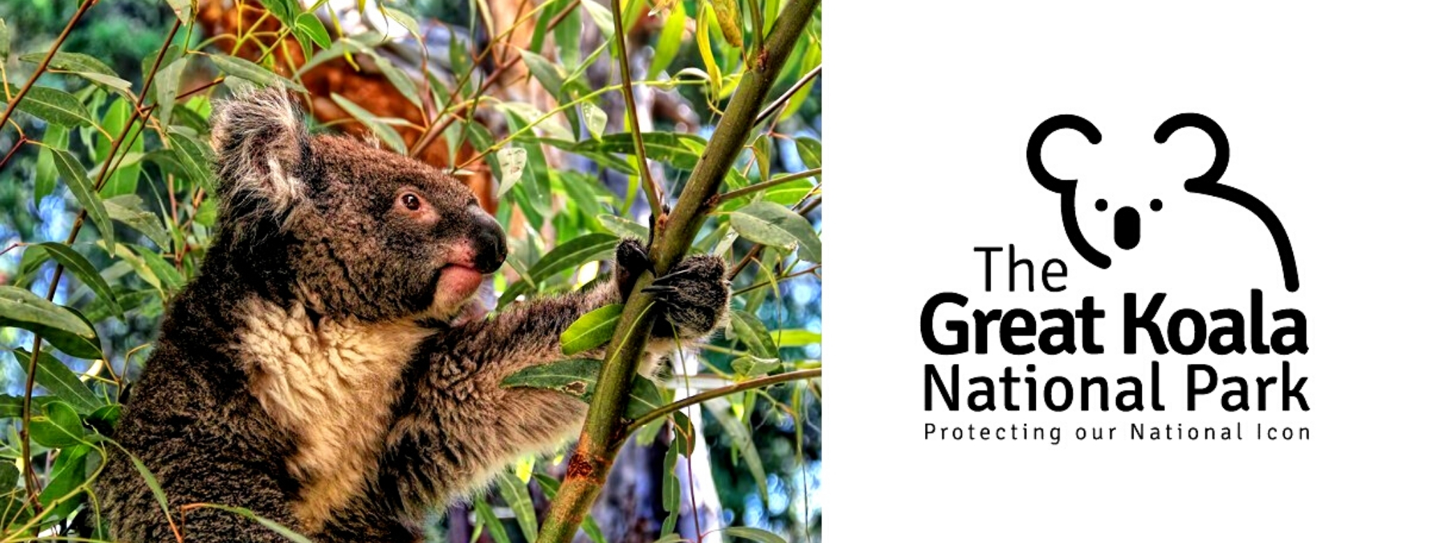 The Great Koala National Park, New South Wales mid-north coast