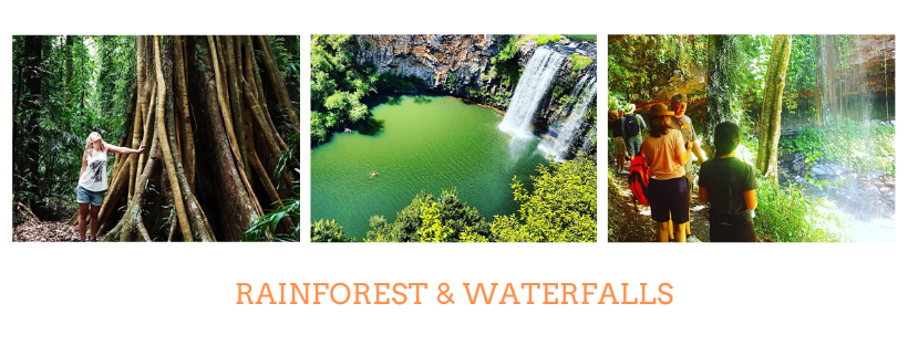 Rainforest and Waterfalls of Dorrigo National Park with Waves to Wilderness